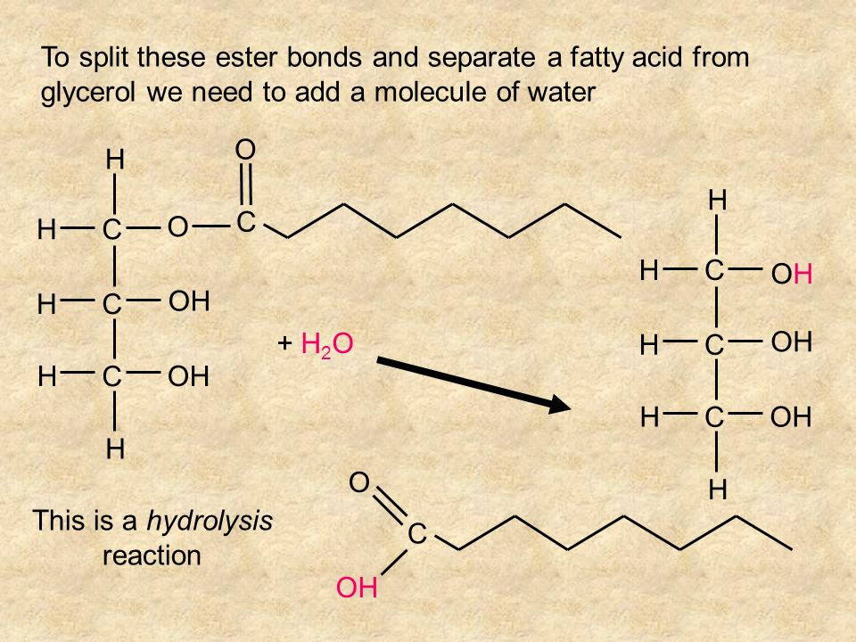 To split these ester bonds and separate a fatty acid from glycerol we need to add a molecule of water C C C HOH H H H H O C O + H 2 O C C C HOH H H H