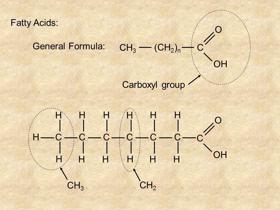 Fatty Acids: General Formula: CH 3 (CH 2 ) n C O OH Carboxyl group H CCC H H HH H H CCC H H HH H H C O OH CH 3 CH 2