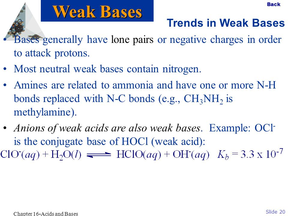 Slide 20 Back Chapter 16-Acids and Bases Trends in Weak Bases Bases generally have lone pairs or negative charges in order to attack protons. Most neu