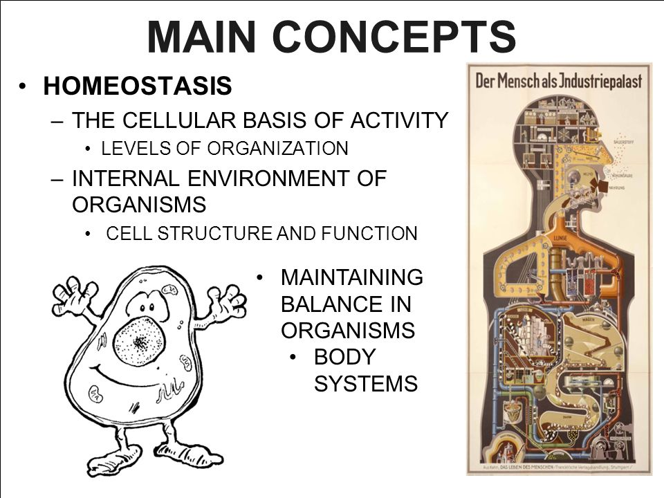 MAIN CONCEPTS HOMEOSTASIS –THE CELLULAR BASIS OF ACTIVITY LEVELS OF ORGANIZATION –INTERNAL ENVIRONMENT OF ORGANISMS CELL STRUCTURE AND FUNCTION MAINTA