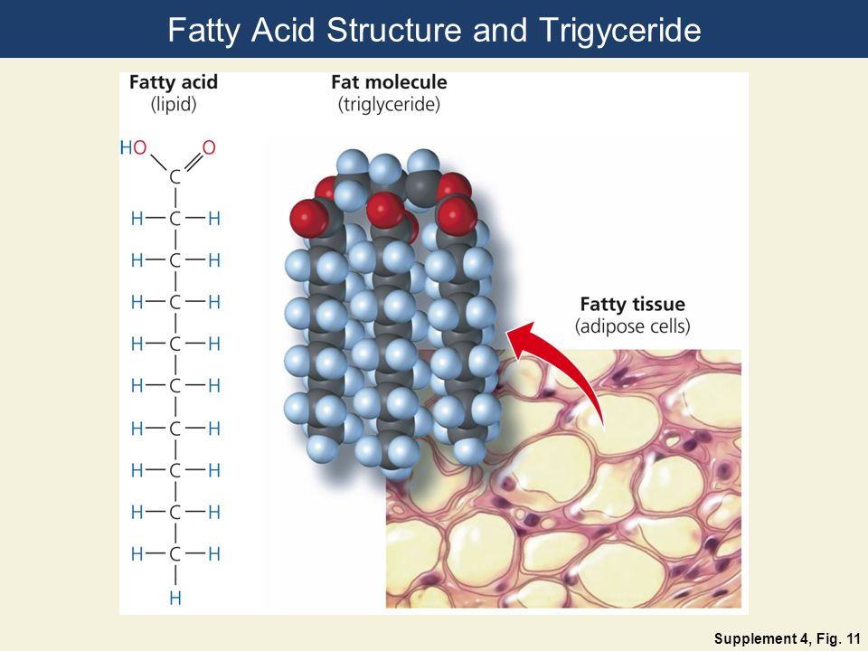 Fatty Acid Structure and Trigyceride Supplement 4, Fig. 11
