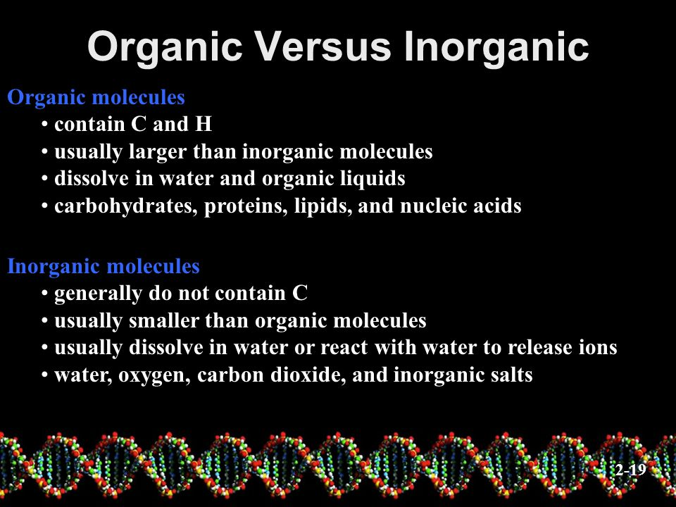 Inorganic Substances Water most abundant compound in living material two-thirds of the weight of an adult human major component of all body fluids medium for most metabolic reactions important role in transporting chemicals in the body can absorb and transport heat Oxygen (O 2 ) used by organelles to release energy from nutrients necessary for survival 2-20 Carbon dioxide (CO 2 ) waste product released during metabolic reactions must be removed from the body Inorganic salts abundant in body fluids sources of necessary ions (Na +, Cl -, K +, Ca 2+, etc.) play important roles in metabolic processes