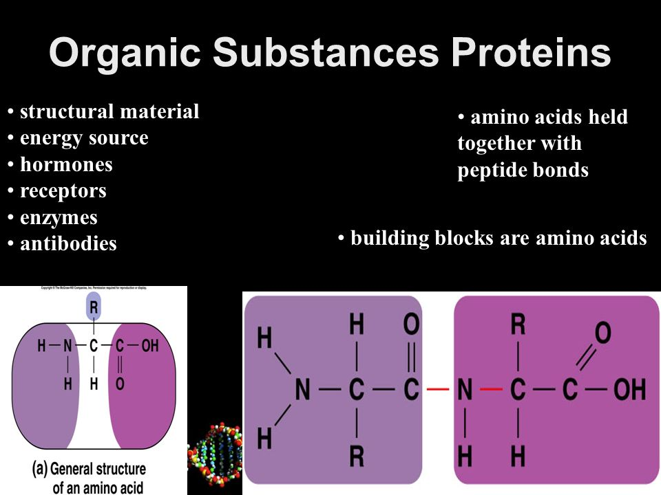 Organic Substances Proteins Four Levels of Structure 2-28