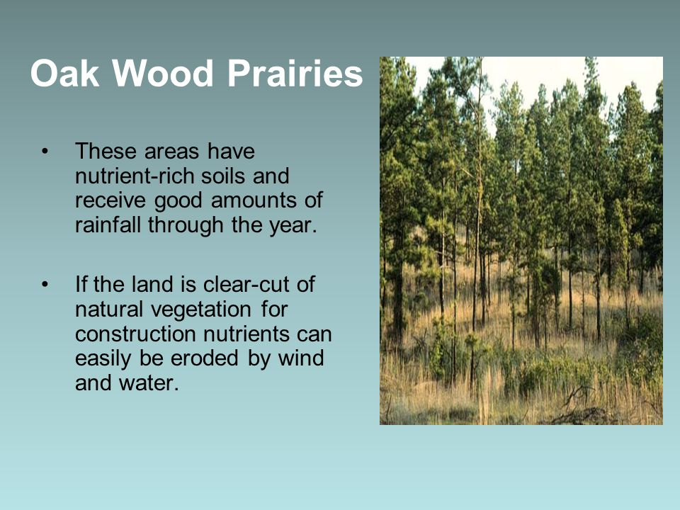 Oak Wood Prairies These areas have nutrient-rich soils and receive good amounts of rainfall through the year. If the land is clear-cut of natural vege