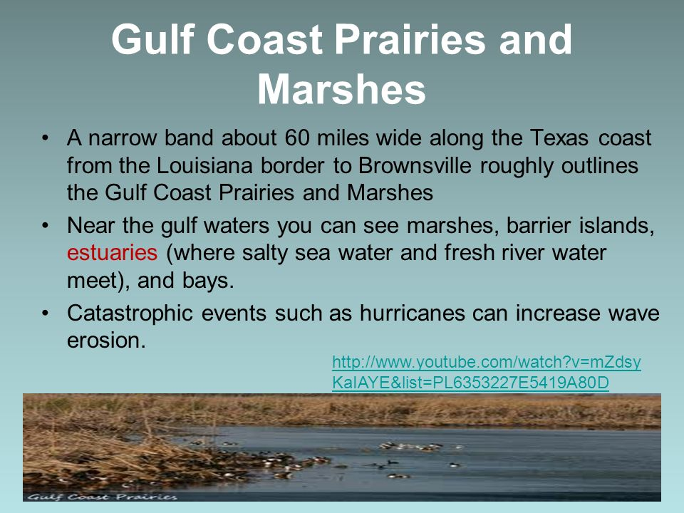 Gulf Coast Prairies and Marshes A narrow band about 60 miles wide along the Texas coast from the Louisiana border to Brownsville roughly outlines the