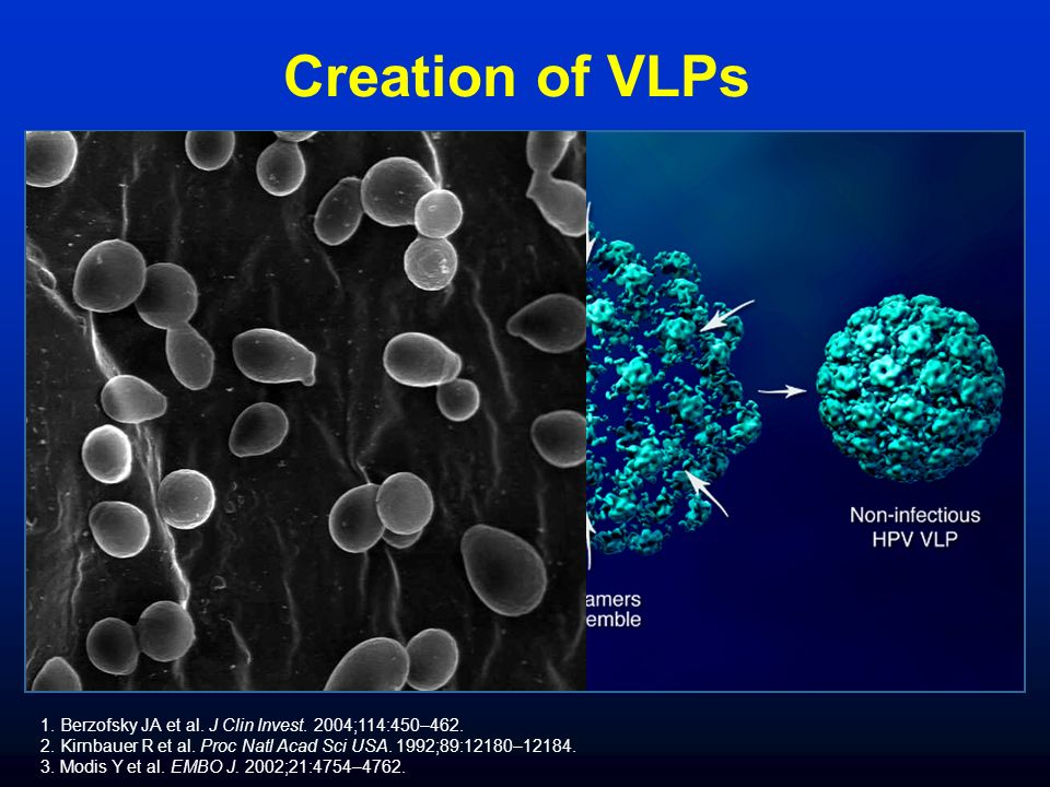 Creation of VLPs 1. Berzofsky JA et al. J Clin Invest.