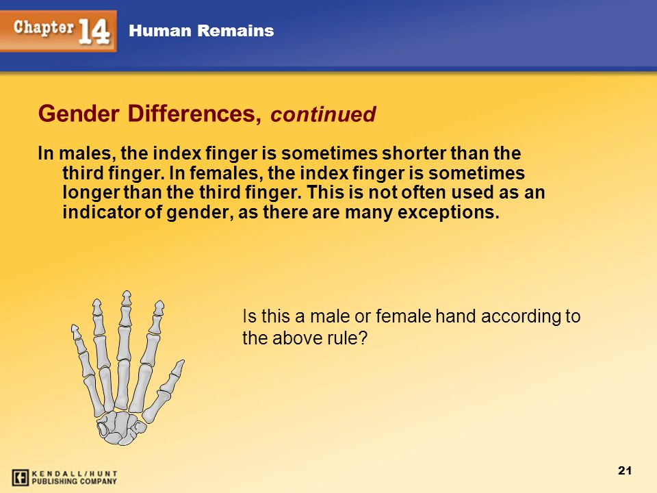Human Remains 21 Gender Differences, continued In males, the index finger is sometimes shorter than the third finger. In females, the index finger is