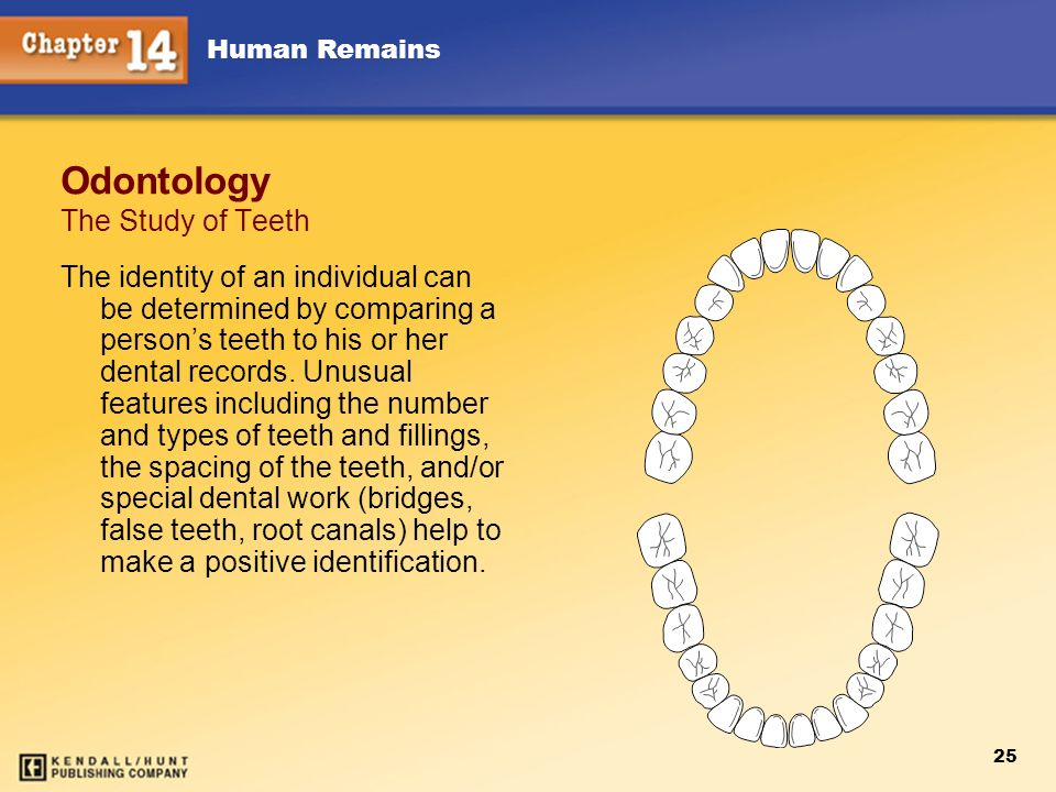 Human Remains 25 Odontology The Study of Teeth The identity of an individual can be determined by comparing a persons teeth to his or her dental recor