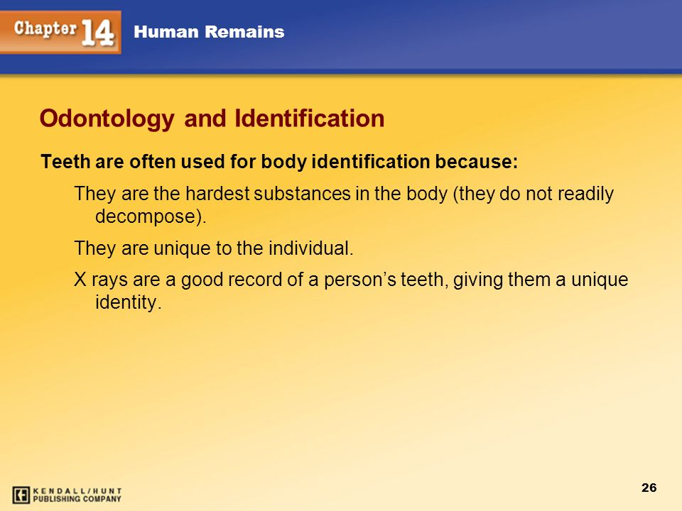 Human Remains 26 Odontology and Identification Teeth are often used for body identification because: They are the hardest substances in the body (they