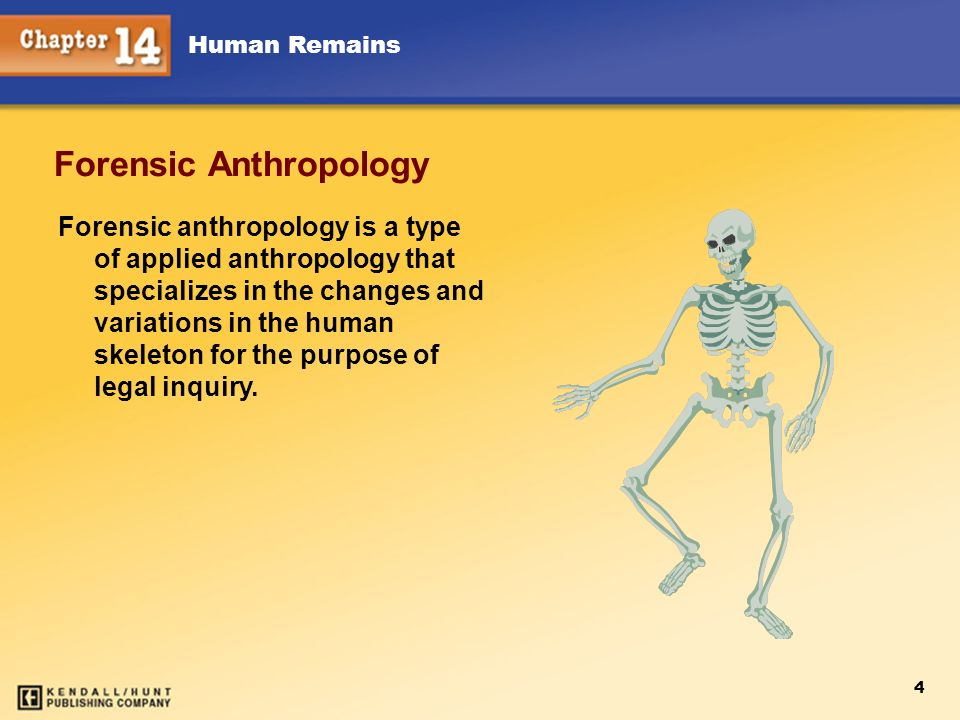 Human Remains 4 Forensic Anthropology Forensic anthropology is a type of applied anthropology that specializes in the changes and variations in the hu