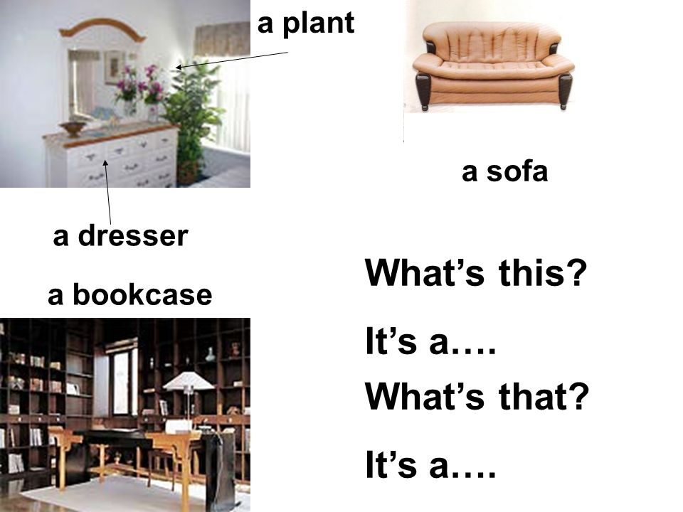 a plant a bookcase a sofa a dresser Whats this? Its a…. Whats that? Its a….