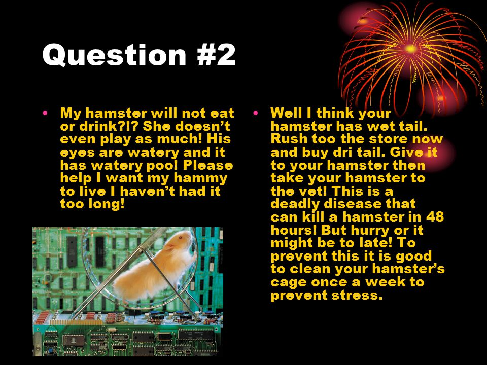 Question #2 My hamster will not eat or drink !. She doesnt even play as much.