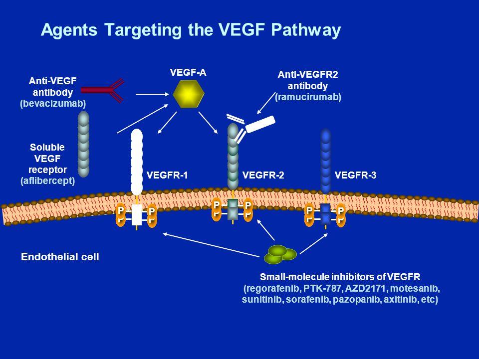 VEGFR-3VEGFR-2VEGFR-1 Endothelial cell VEGF-A P P P P P P P P P P P P Anti-VEGF antibody (bevacizumab) Anti-VEGFR2 antibody (ramucirumab) Small-molecule inhibitors of VEGFR (regorafenib, PTK-787, AZD2171, motesanib, sunitinib, sorafenib, pazopanib, axitinib, etc) Soluble VEGF receptor (aflibercept) Agents Targeting the VEGF Pathway