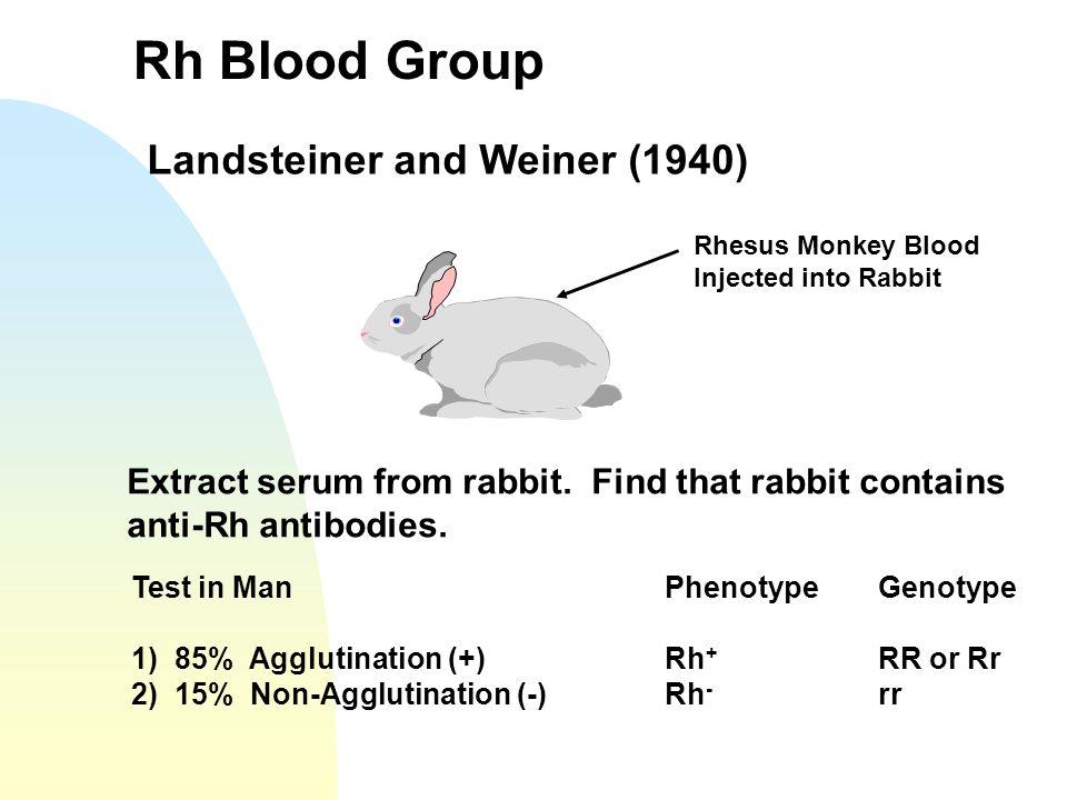 Rh Blood Group Landsteiner and Weiner (1940) Rhesus Monkey Blood Injected into Rabbit Extract serum from rabbit. Find that rabbit contains anti-Rh ant