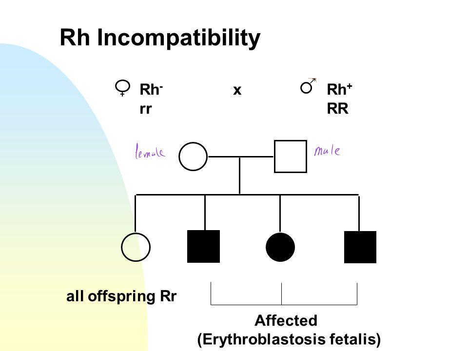Rh Incompatibility Rh - xRh + rrRR Affected (Erythroblastosis fetalis) all offspring Rr