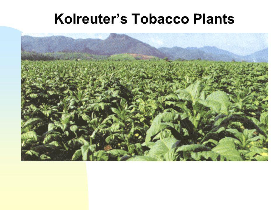 Kolreuters Tobacco Plants