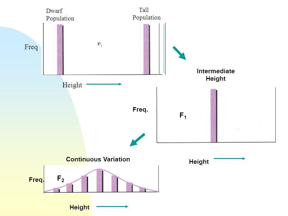 Dwarf Population Tall Population Height Freq Intermediate Height F1F1 Height Freq. Height F2F2 Continuous Variation