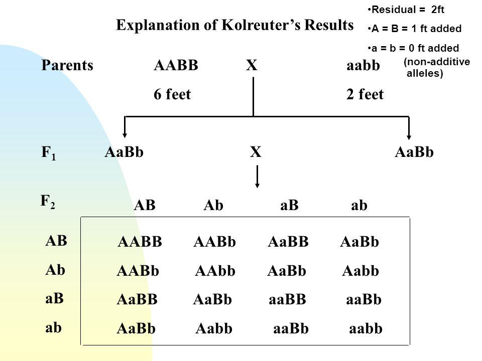 Explanation of Kolreuters Results ParentsAABB Xaabb 6 feet2 feet F 1 AaBbXAaBb AABB AABb AaBB AaBb AABb AAbb AaBb Aabb AaBB AaBb aaBB aaBb AaBb Aabb a