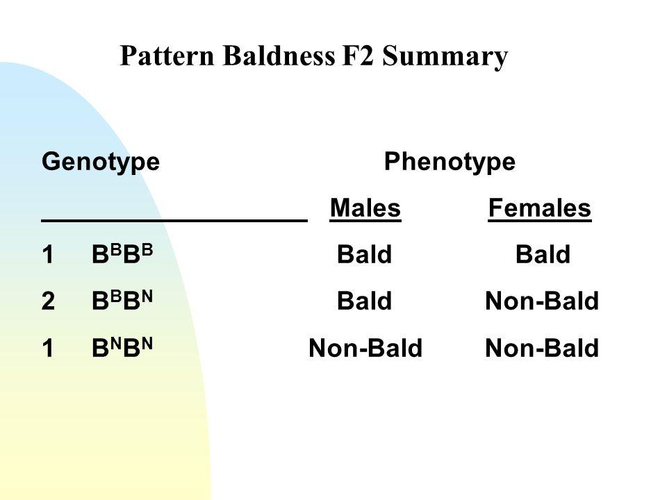 Pattern Baldness F2 Summary Genotype Phenotype Males Females 1 B B B B Bald Bald 2 B B B N Bald Non-Bald 1 B N B N Non-Bald Non-Bald