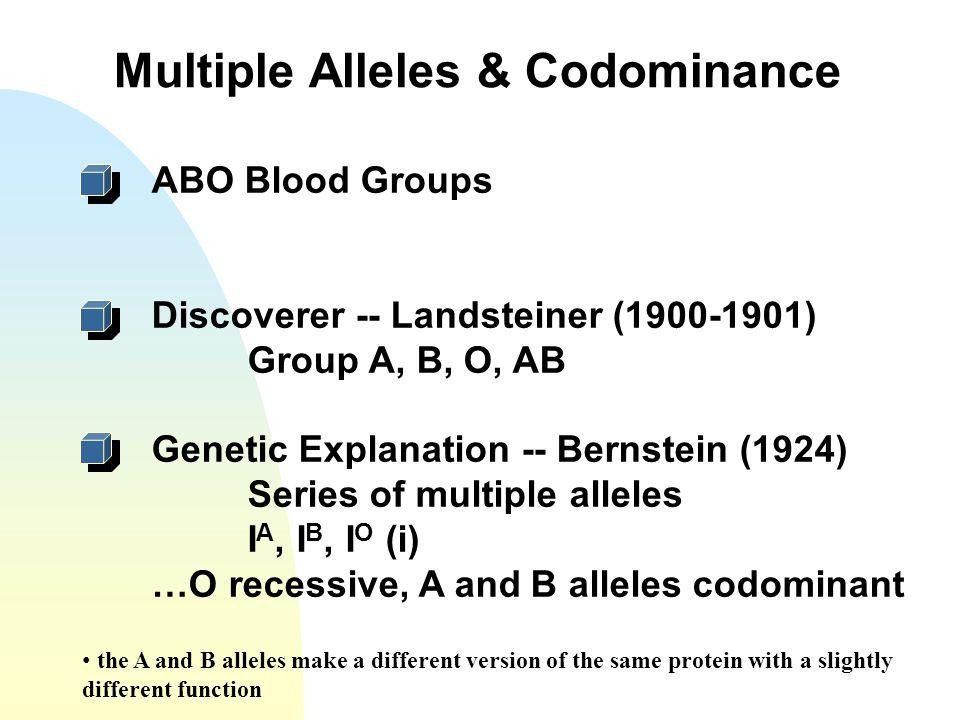 Multiple Alleles & Codominance ABO Blood Groups Discoverer -- Landsteiner (1900-1901) Group A, B, O, AB Genetic Explanation -- Bernstein (1924) Series