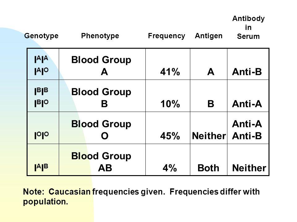 IAIAIAIOIAIAIAIO Blood Group A41%AAnti-B IBIBIBIOIBIBIBIO Blood Group B10%BAnti-A IOIOIOIO Blood Group O45% Neither Anti-A Anti-B IAIBIAIB Blood Group