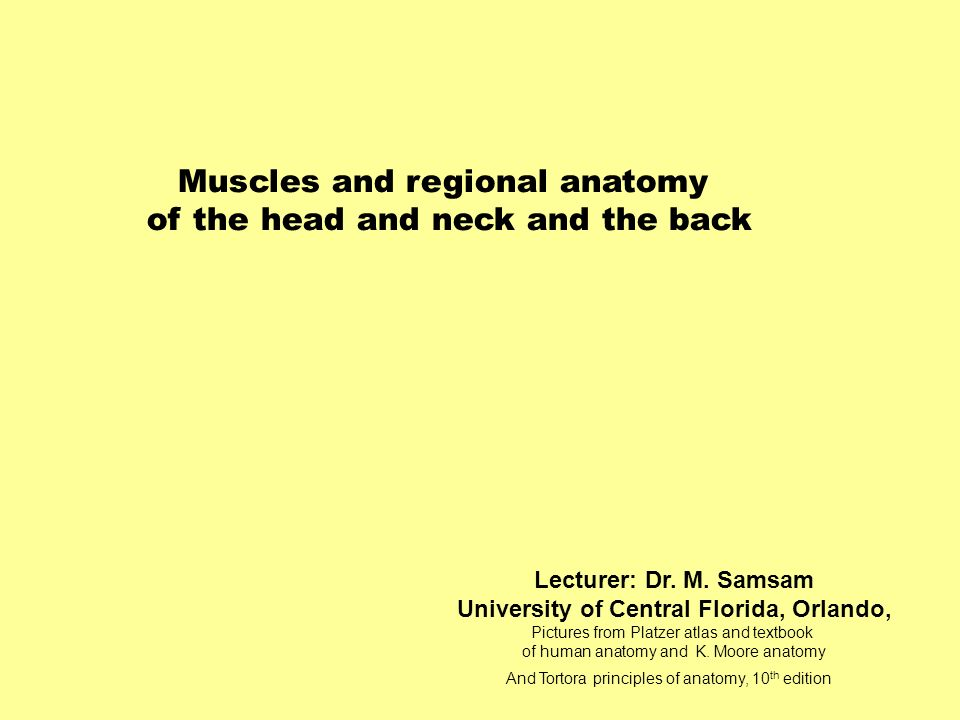 Lecturer: Dr. M. Samsam University of Central Florida, Orlando, Pictures from Platzer atlas and textbook of human anatomy and K. Moore anatomy And Tor