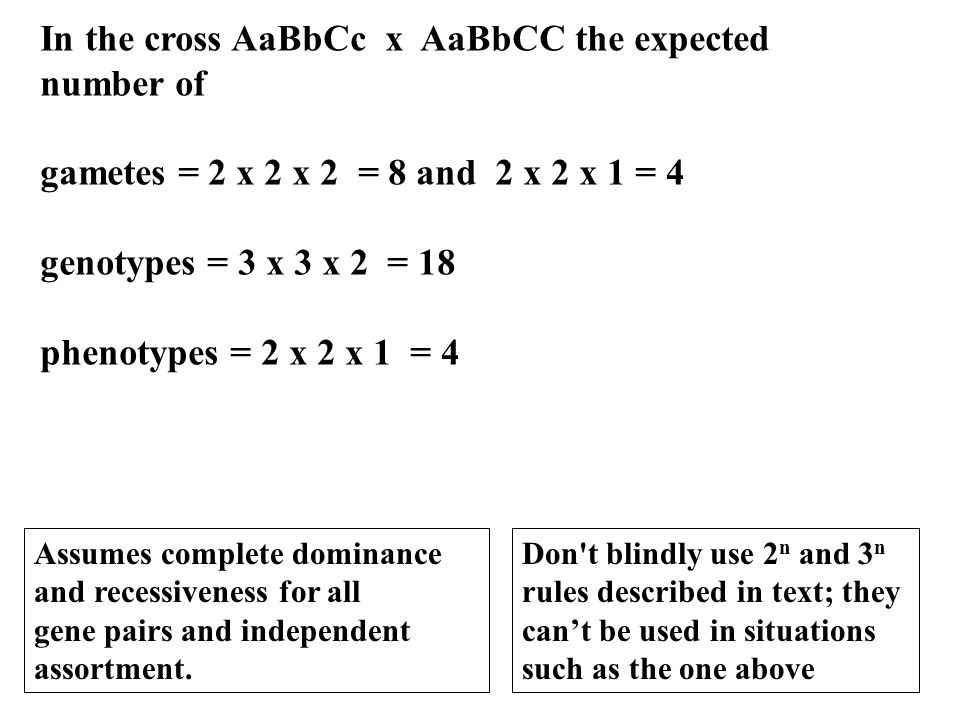In the cross AaBbCc x AaBbCC the expected number of gametes = 2 x 2 x 2 = 8 and 2 x 2 x 1 = 4 genotypes = 3 x 3 x 2 = 18 phenotypes = 2 x 2 x 1 = 4 As