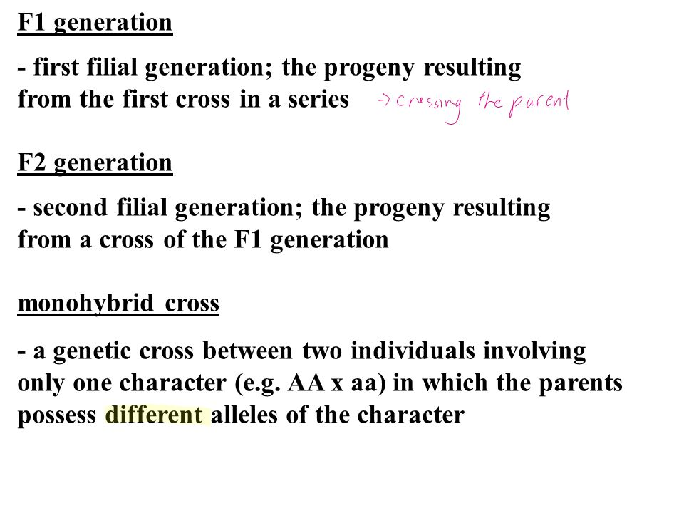 F1 generation - first filial generation; the progeny resulting from the first cross in a series F2 generation - second filial generation; the progeny