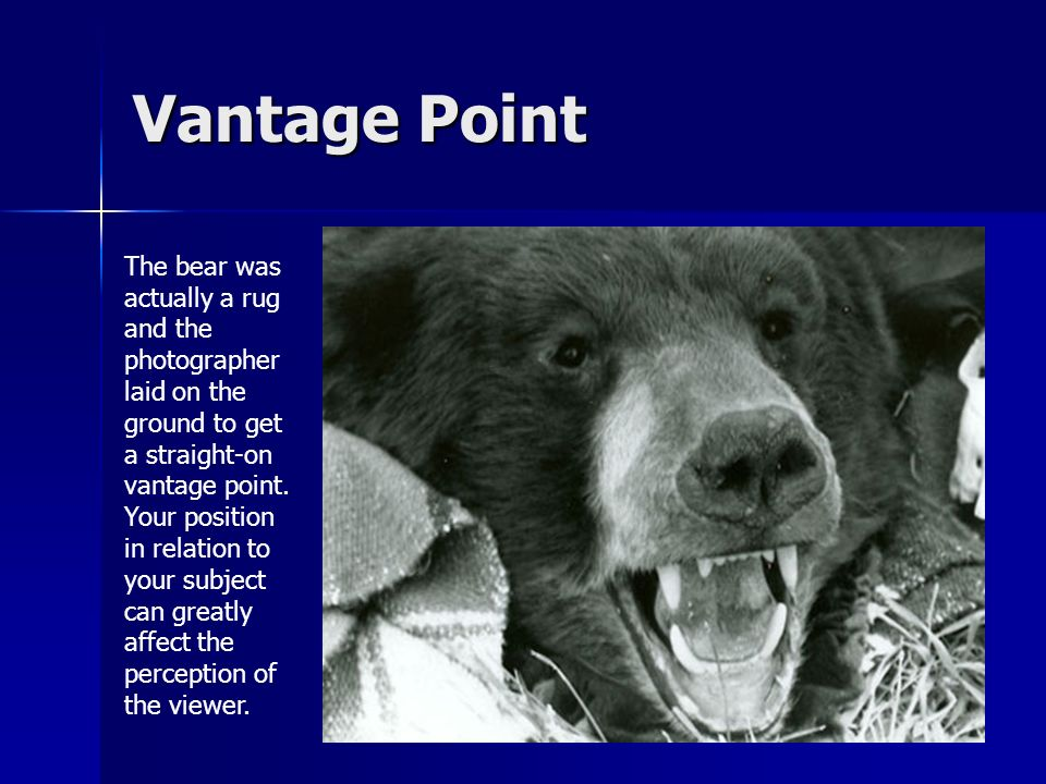 Vantage Point The bear was actually a rug and the photographer laid on the ground to get a straight-on vantage point.