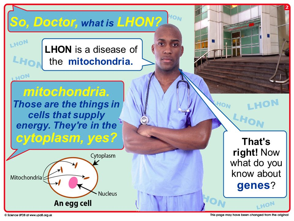 So, Doctor, what is LHON.mitochondria. Those are the things in cells that supply energy.