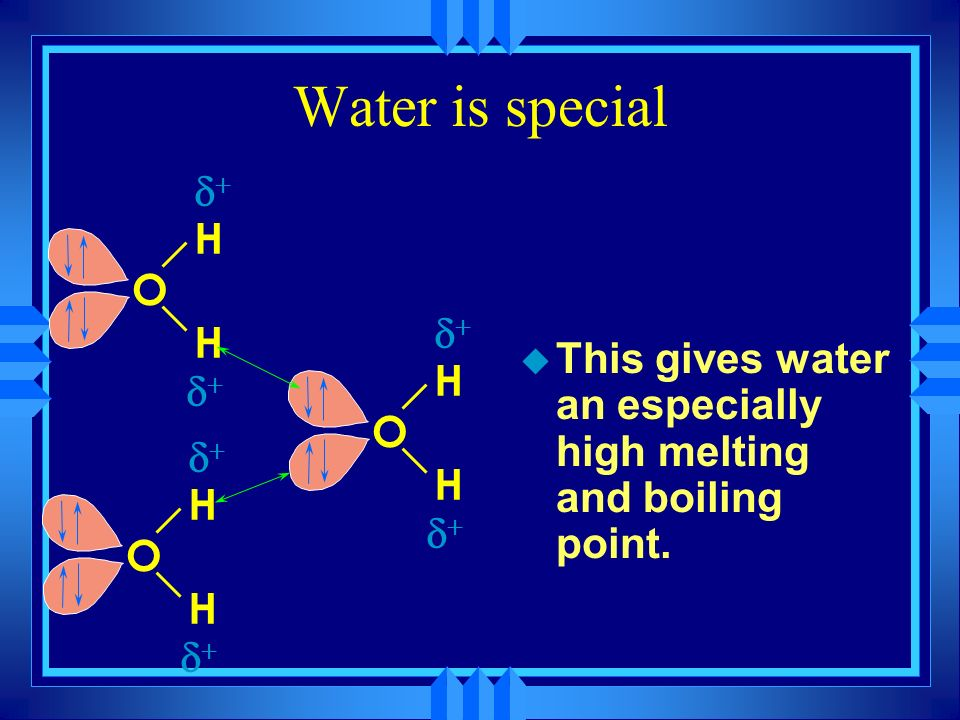 Water is special u Each molecule has two polar O-H bonds. u Each molecule has two lone pair on its oxygen. u Each oxygen can interact with 2 hydrogen