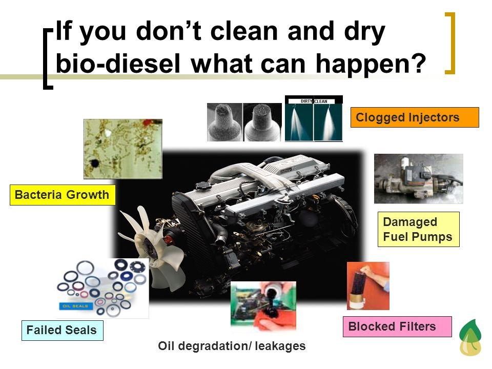 If you dont clean and dry bio-diesel what can happen? Clogged Injectors Damaged Fuel Pumps Blocked Filters Failed Seals Bacteria Growth Oil degradatio