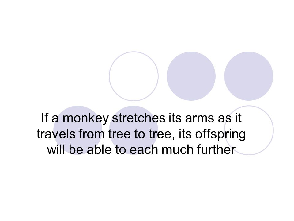 If a monkey stretches its arms as it travels from tree to tree, its offspring will be able to each much further