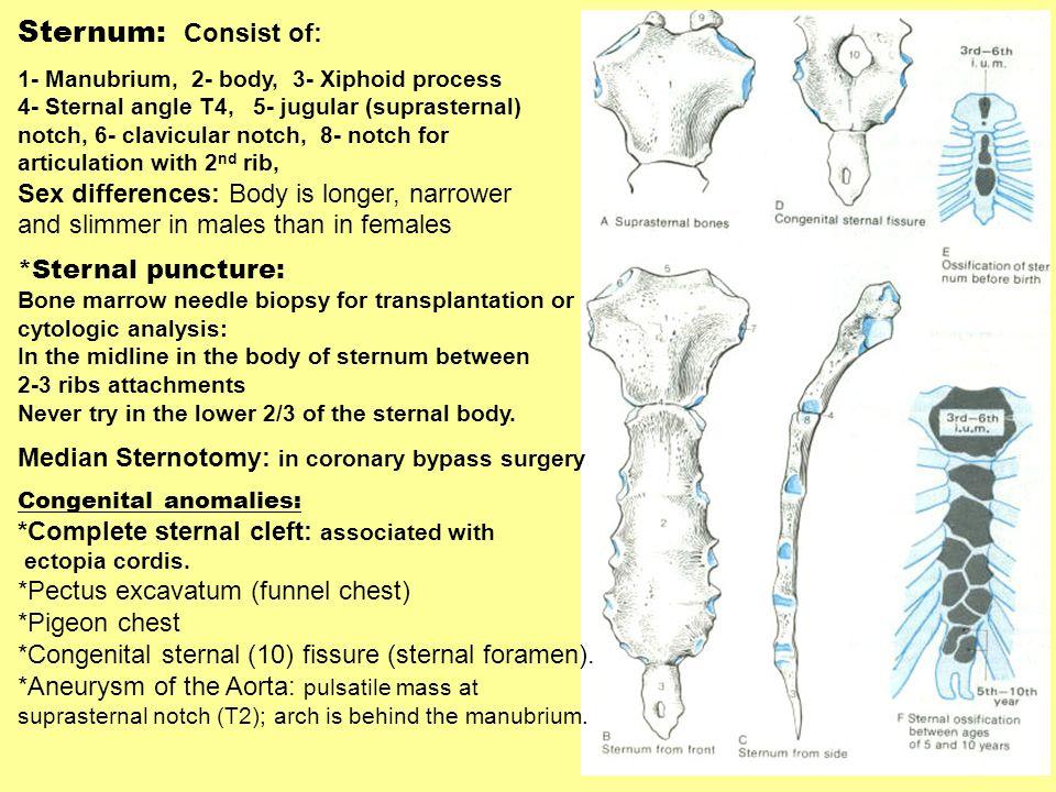 Sternum: Consist of: 1- Manubrium, 2- body, 3- Xiphoid process 4- Sternal angle T4, 5- jugular (suprasternal) notch, 6- clavicular notch, 8- notch for