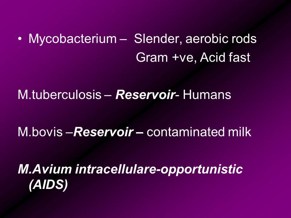 Mycobacterium – Slender, aerobic rods Gram +ve, Acid fast M.tuberculosis – Reservoir- Humans M.bovis –Reservoir – contaminated milk M.Avium intracellu