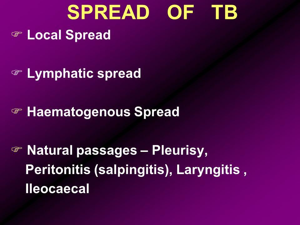 SPREAD OF TB Local Spread Lymphatic spread Haematogenous Spread Natural passages – Pleurisy, Peritonitis (salpingitis), Laryngitis, Ileocaecal