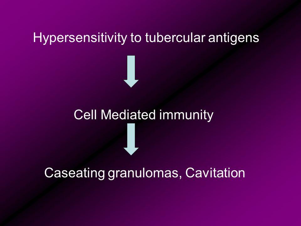 Hypersensitivity to tubercular antigens Cell Mediated immunity Caseating granulomas, Cavitation
