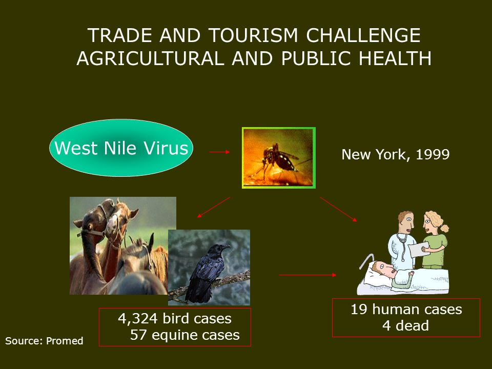 Source: Promed TRADE AND TOURISM CHALLENGE AGRICULTURAL AND PUBLIC HEALTH West Nile Virus New York, 1999 4,324 bird cases 57 equine cases 19 human cas