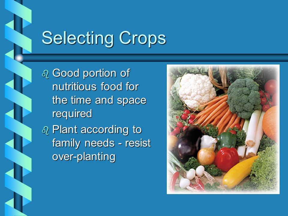 Selecting Crops b Good portion of nutritious food for the time and space required b Plant according to family needs - resist over-planting