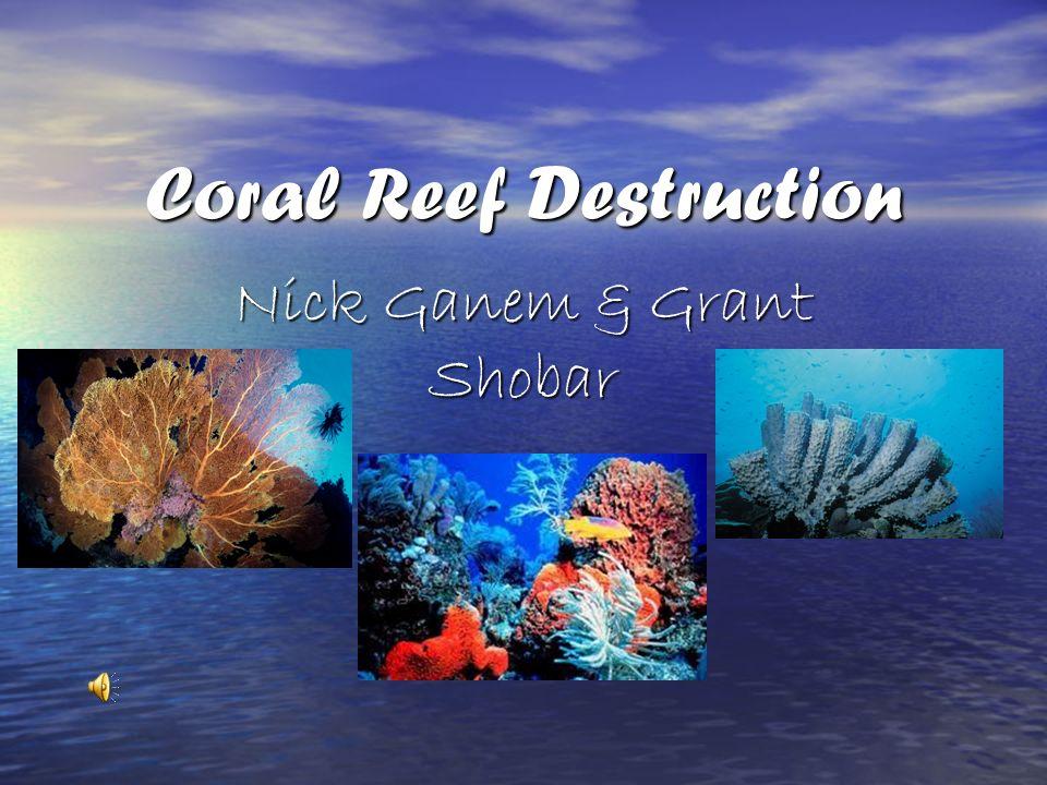 Coral Reef Destruction Nick Ganem & Grant Shobar
