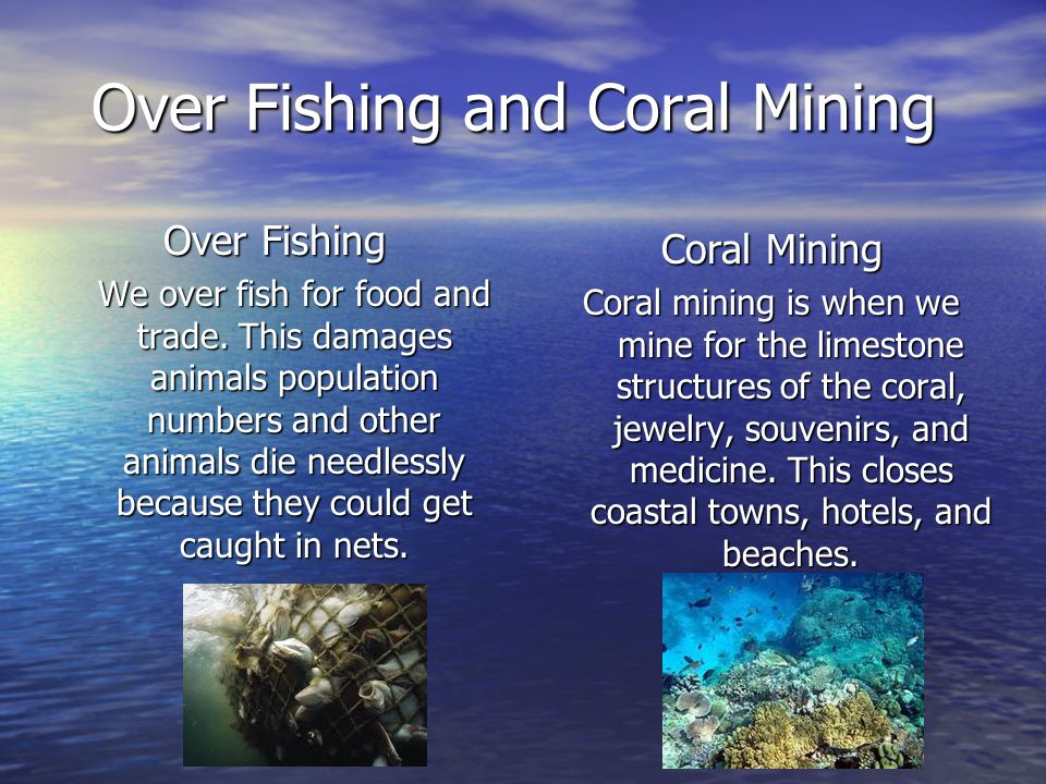 Over Fishing and Coral Mining Over Fishing We over fish for food and trade. This damages animals population numbers and other animals die needlessly b