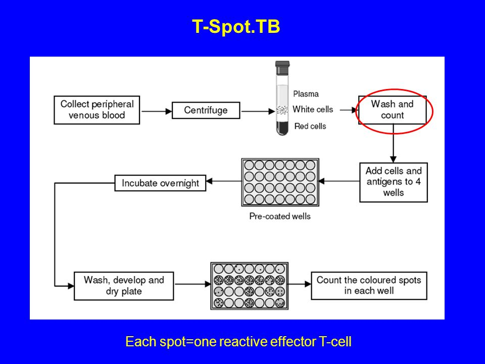 Each spot=one reactive effector T-cell T-Spot.TB