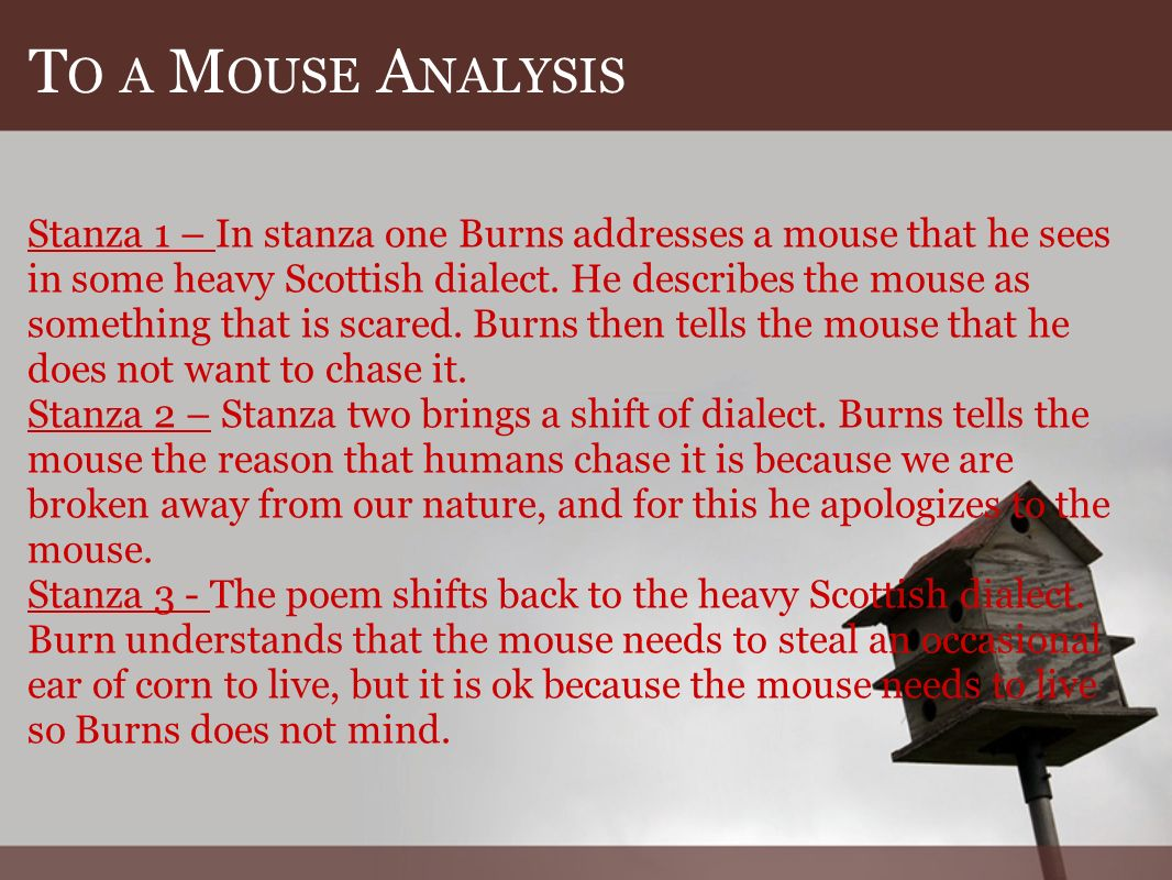 T O A M OUSE A NALYSIS Stanza 1 – In stanza one Burns addresses a mouse that he sees in some heavy Scottish dialect.