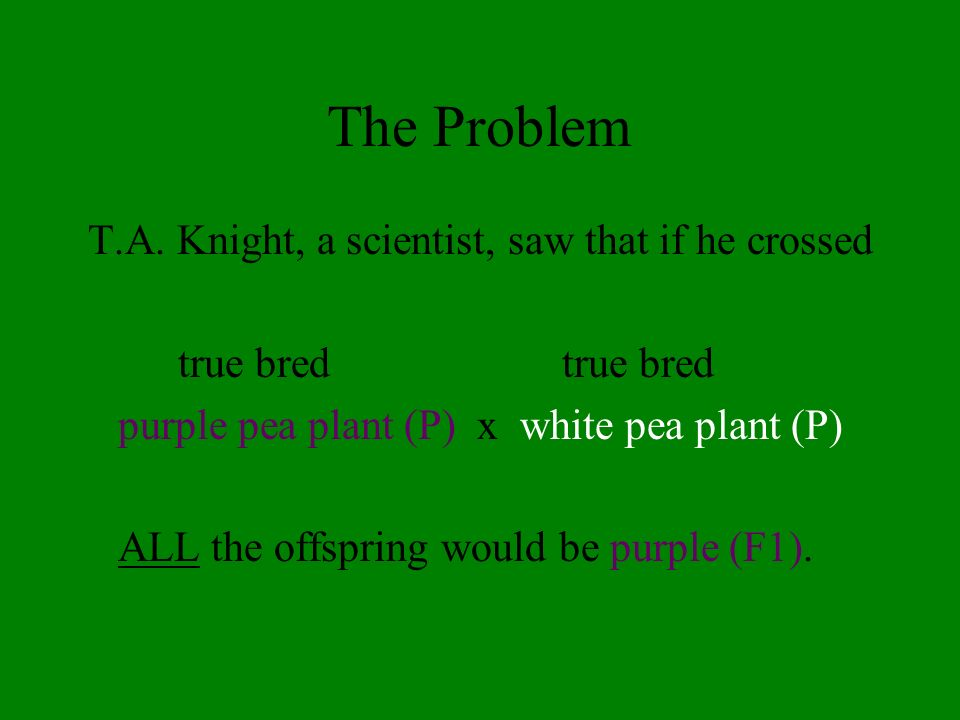 The Problem T.A. Knight, a scientist, saw that if he crossed true bred purple pea plant (P) x white pea plant (P) ALL the offspring would be purple (F