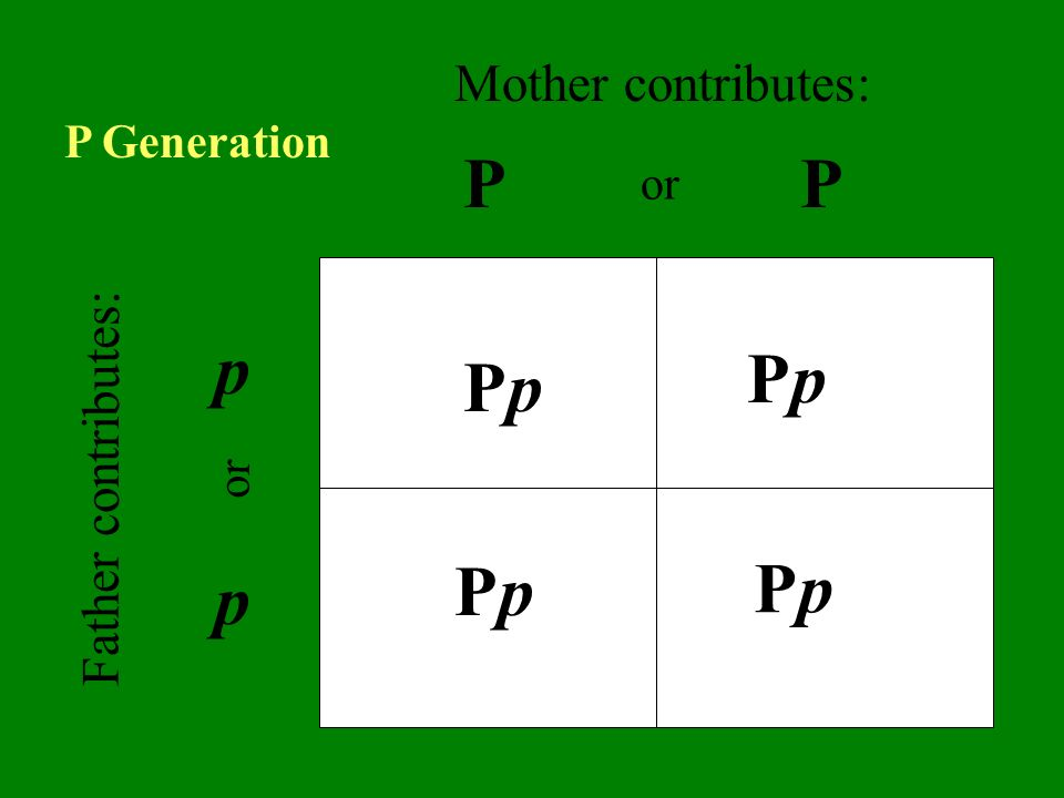 PP p p PpPp PpPp PpPp PpPp Father contributes: Mother contributes: or P Generation