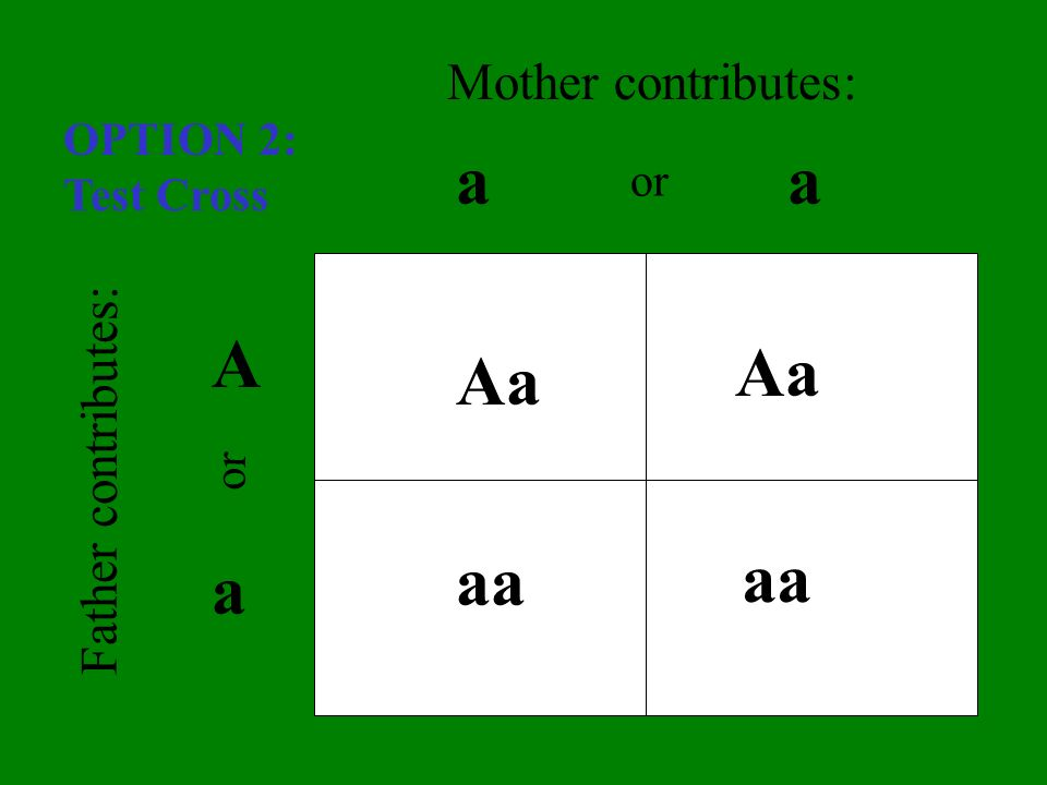 aa A a Aa aa Aa aa Father contributes: Mother contributes: or OPTION 2: Test Cross