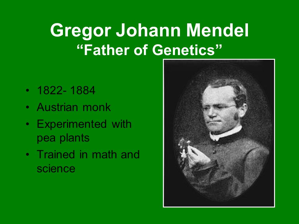 Gregor Johann Mendel Father of Genetics 1822- 1884 Austrian monk Experimented with pea plants Trained in math and science