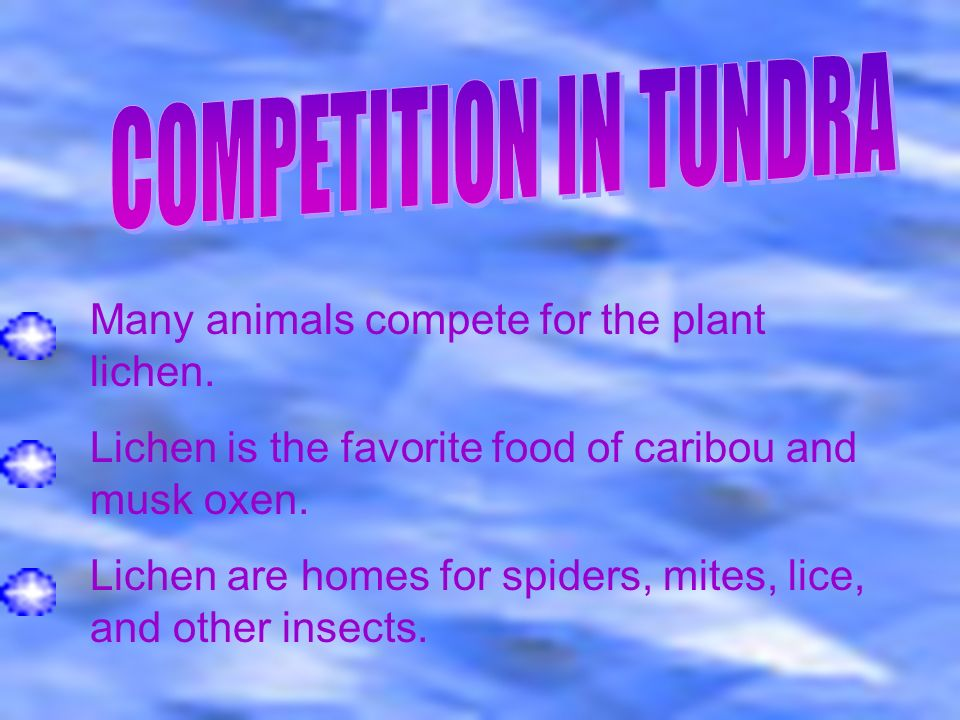 The tundra is a major balance in our ecosystem and it must be there for many species to sustain life. If humanity interferes with the tundra,the world