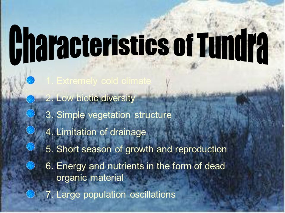 A tundra is a vast, treeless plain in the arctic region. Tundra is the coldest of all the biomes.