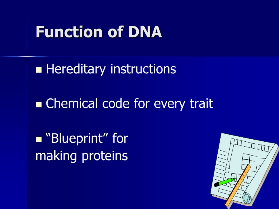 Genes and Alleles alleles are alternative forms of a gene; one allele from mom, one from dad alleles are alternative forms of a gene; one allele from mom, one from dad human genome includes the total amount of DNA in a cell human genome includes the total amount of DNA in a cell only ~1.5% of the DNA is coding (makes proteins) – the rest is junk DNA only ~1.5% of the DNA is coding (makes proteins) – the rest is junk DNA
